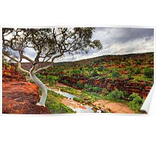 The Finke River - Palm Valley Poster