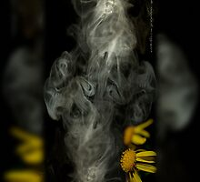 Optimisticly Dense Daisies © Vicki Ferrari Photography by Vicki Ferrari