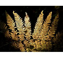 Forest Fern Photographic Print