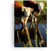 Cows Reflecting Canvas Print