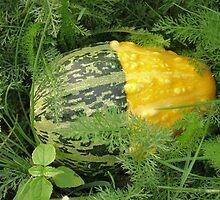 Decorative pumpkin by fotorobs