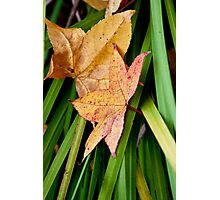 Autumn's leaf Photographic Print