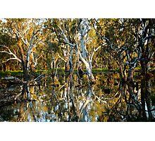The Swamp Photographic Print