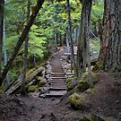 The Trail by Charles & Patricia   Harkins ~ Picture Oregon