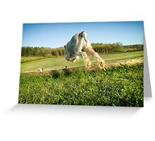 Orange & White Italian Spinone Dog in Action Greeting Card