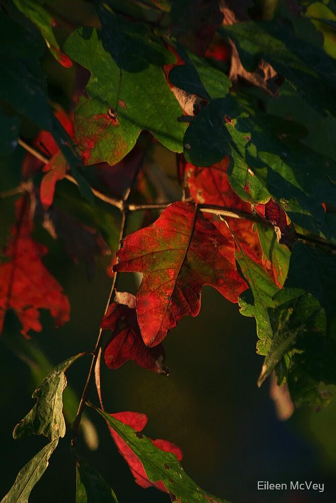 An Oak Leaf by Eileen McVey