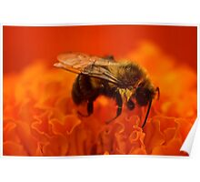 Sleeping Bee Poster