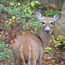 White Tail Portrait by Imagery