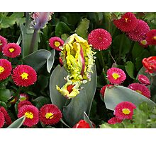 Red and Yellow Photographic Print