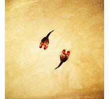 Animal Art - Boxing Kangaroos Photographic Print