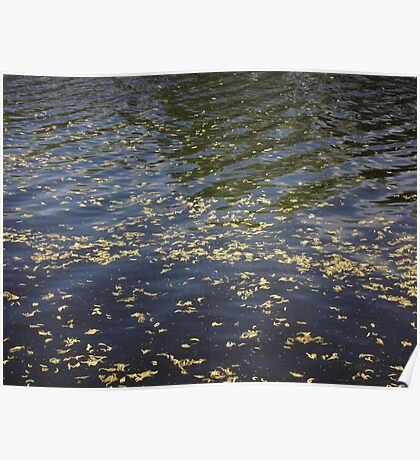 Spring river with catkins Poster
