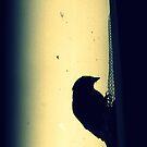 Chaffinch on a window by Kristina Perenyiova