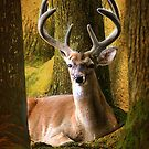 Nestled In The Woods by Kathy Baccari