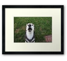 CHEWY LOVES TO SING Framed Print