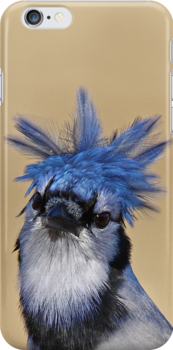 iPhone Case - Blue Jay 1 by Jim Cumming