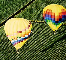 """Balloons Over Napa Valley"" by Cindy Longhini"