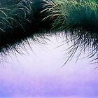 """Nature's Eyelashes"" by Cindy Longhini"