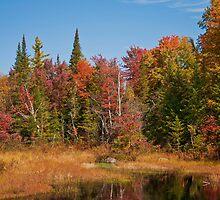 Fall Adirondack Swamp by mlaprade