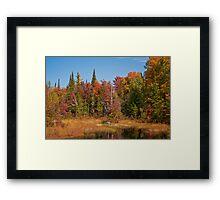 Fall Adirondack Swamp Framed Print