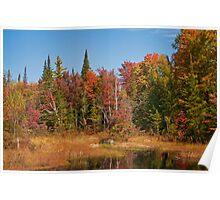 Fall Adirondack Swamp Poster