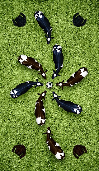 Animal Art - Football Cows by Michael Murray