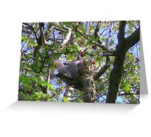Hiding in the tree Greeting Card