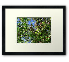 Chilling out, on the tree top Framed Print
