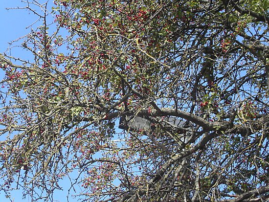 """IL BIANCOSPINO ...un'albero secolare! Italy .................per anna """"anaisanais"""" come rappresentante di tutte le madri che hanno perso un figlio ! by Guendalyn"""