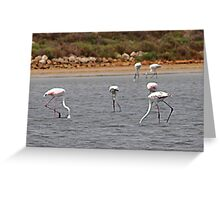 Pink Flamingos Southern France Greeting Card