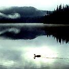 Duffy Duck by Syd Bates