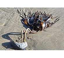 Two Legged  Seaweed Photographic Print
