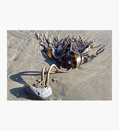 Two Legged  Seaweed Photographic Print