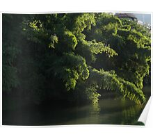Morning light on the waterside of the River Cuale Poster