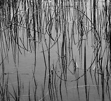 Reeds in Mud Lake, Colorado by John Littell