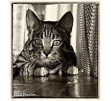 Keeping a watch on you .. Photographic Print