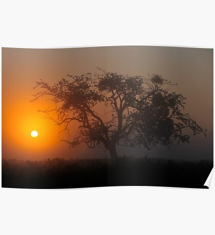 Bushy Park Sunrise Poster