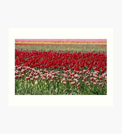 Skagit Valley Tulip Fields Art Print