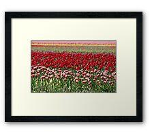 Skagit Valley Tulip Fields Framed Print