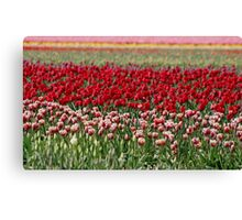 Skagit Valley Tulip Fields Canvas Print