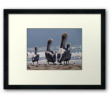 Group of migrant pelicans at the beach of Puerto Vallarta - Grupo de pelicanos migrantes en la Bahia de Puerto Vallarta Framed Print