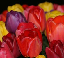 Colorful Tulips by Debbie Stika