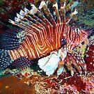 Lionfish by Leon Heyns
