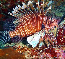 Lionfish by Leon Heyns