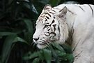 White Tiger by Leanne Allen