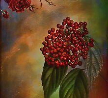 Autumn flavors -Rowanberry by andy551