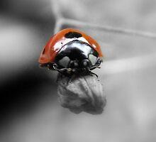 ladybird by lorainek