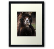 Do you fancy a ride sweet thing ??? Framed Print