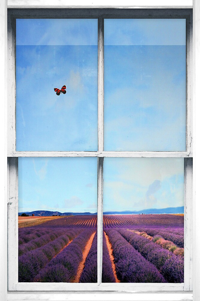 Window Art 4 - Lavender Field by Michael Murray