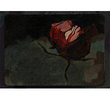 Nighttime rose Photographic Print