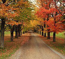 Autumn Wonderland II by Debbie  Roberts